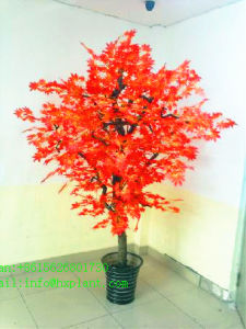 China Supply Decoration Artificial Maple Dry Bonsai Tree pictures & photos