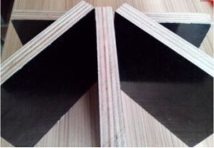 Film Faced Poplar/Birch Combi Plywood for Building