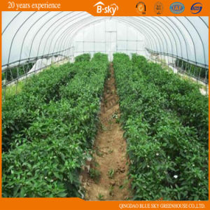 Tunnel Green House for Vegetable Growing pictures & photos