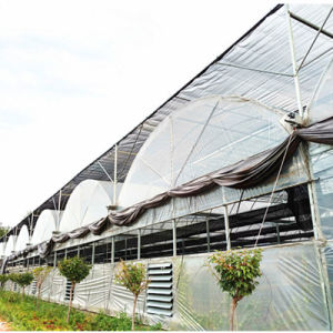 Single Tunnel Greenhouse in Poland for Tomato