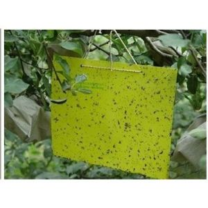 Thrips Whitefly Glue Paper, Thrips Whitefly Glue Traps, Stick Insect Yellow Blue Board/Sticky Paper (AM-TP01) pictures & photos