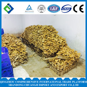 Chinese Fresh Ginger Whole Shandong Origin
