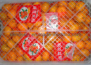 Nanfeng Baby Orange