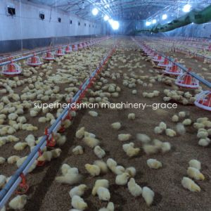 Chicken Farm Machinery &Equipment for Broilers pictures & photos