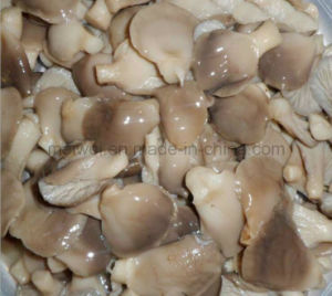 Mushroom Canned Abalone Mushroom with Cheap Price pictures & photos