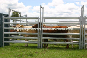 Australian Standard 1.8 X 2.1m Galvanized Cattle Panel China Supplier pictures & photos