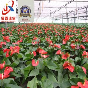 High-Grade and Beautiful Flower Greenhouse pictures & photos