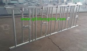 Customized Cattle Farm Cow Self Lock System
