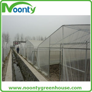 Galvanized Steel Structure Tunnel Greenhouse