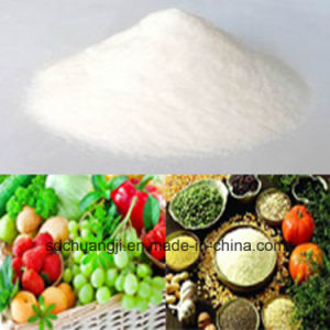 Water Soluble Chemical Fertilizer NPK 20-20-20 with Best Price