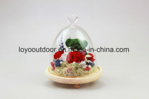 Preserved Fresh Flower Christmas Decoration pictures & photos
