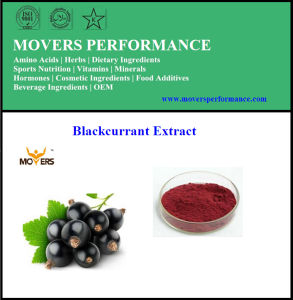 Pure Natural Orangic Best Quality Blackcurrant Extract pictures & photos