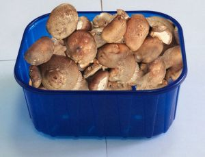 FDA Approval Custom-Made Different Types PP Mushroom Tray pictures & photos