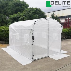 Wholesale Vegetables Products