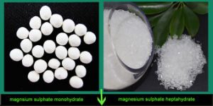 China Supply Magnesium Sulphate Manufacturer 99%-99.5%Min pictures & photos