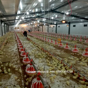 Automatic Chicken House Poultry Farm Equipment for Broiler with Steel  Structure Design