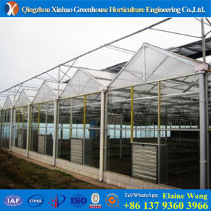 China Factory Glass Hysdroponic Green House for Tomato pictures & photos