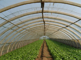 Agricultural Greenhouse Frame/ Vegetable Greenhouse pictures & photos