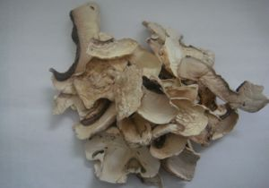 Dehydrated or AD Champignon