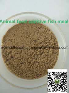 Fish Meal with Protein 65%