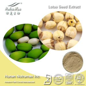 100% Natural Lotus Seed Extract (Ratio: 4: 1~20: 1) - Nutramax Supplier