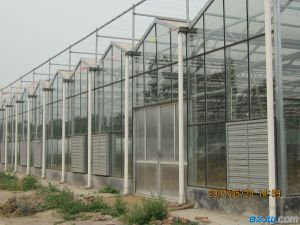 Commercial Aluminum Frame Polycarbonate Sheet Greenhouse for Vegebable and Fruit