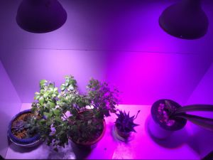 LED Bulb Grow Light for Factory Plant Breeding pictures & photos