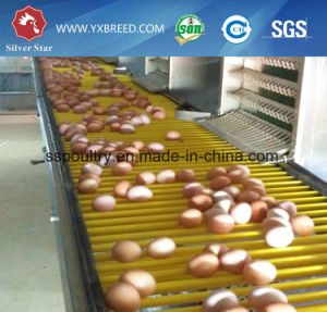 H Type Automatic Manure Removal Chicken Poultry Egg Layer Cage System pictures & photos