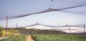 Insect Net Shading Net House for Anti Insect or Shading Purpose pictures & photos