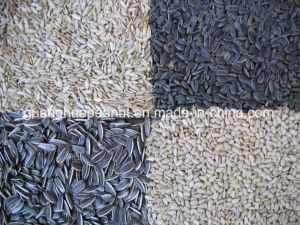 Hot Sale Sunflower Seed New Crop