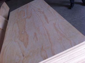 High Quality Pine Face Plywood pictures & photos