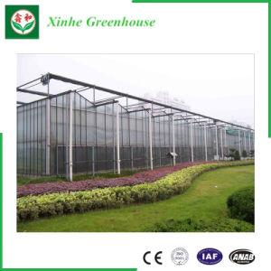 Wholesale Vegetable