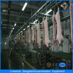 Slaughter Equipment Pig with 20 Units/Hour