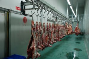 Sheep Slaughter Line Made in China pictures & photos