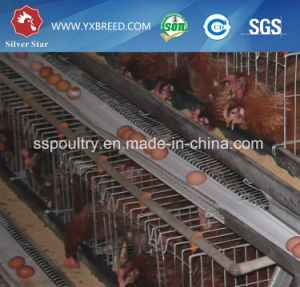 Chicken Breeding Cage/Layer Egg Chicken Cage/Poultry Farm House Design pictures & photos