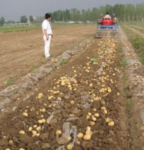 Good Quality Potato Harvester for Agricultural Use pictures & photos