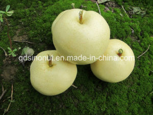 New Crystal Pear pictures & photos