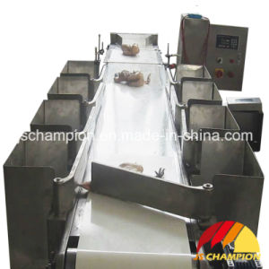 Poultry Slaughterhouse Used Automatic Chicken Bodies Weighing and Grading Machine pictures & photos