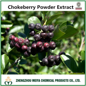 Hot Sale Chokeberry Powder Extract with Anthocyanin 10% 15% UV pictures & photos