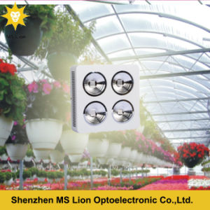 Red Blue 800W COB LED Grow Light for Flowers