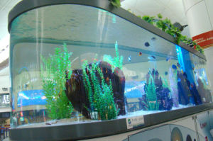Transparent Acrylic Oval Fish Tank