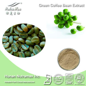 Losing Weight Green Coffee Bean Extract (10%~50% Chlorogenic Acid)