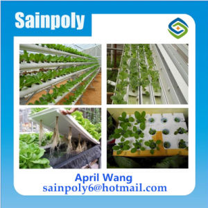 Low Cost Plastic Film Agricultural Hydroponic Greenhouse System pictures & photos