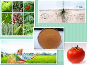 Organic NPK Compound Fertilizer Agricultural 40-50% Amino Acid Powder pictures & photos