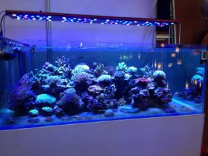 Programmable 48inch 240W LED Aquarium Lighting for Coral Reef Growth : coral lighting - www.canuckmediamonitor.org