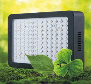 High Power LED Grow Light for Herbs and Vegetable