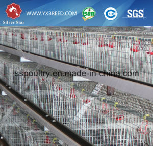 20000 Pullets Brooder Chicken Cages Made in China for Poultry Framing pictures & photos