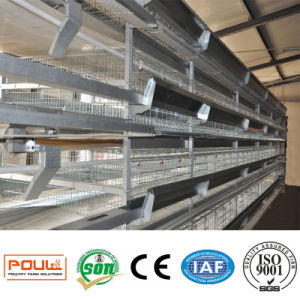 Best Price Galvanization Automatic Layer Cage Poultry Equipment System pictures & photos