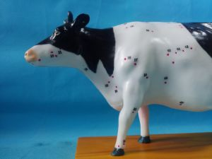 Cattle Acupuncture Education and Domotration Model