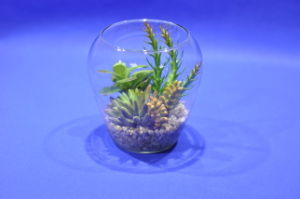 Artificial Plants and Flowers of Mini Plant Succulent Gu-SD0276